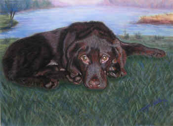 Jasper - Pastel painting by Margo Kelley
